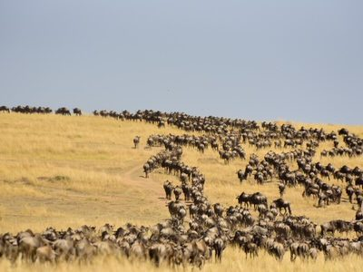 Masai Mara Great Migration Photography Safari