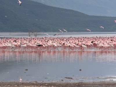 Olorgesailie Pre-Historic Site and Lake Magadi Tour