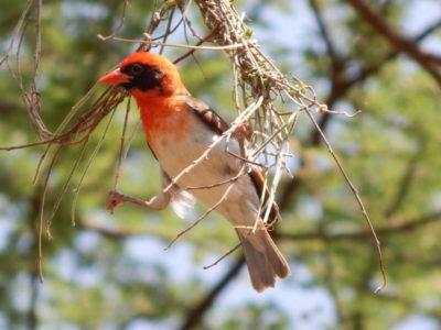 Tanzania Birds Photography Safari
