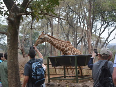 Giraffe Centre Tour