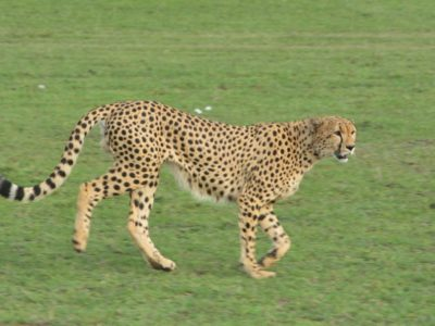 Best of Tanzania Wildlife Safari