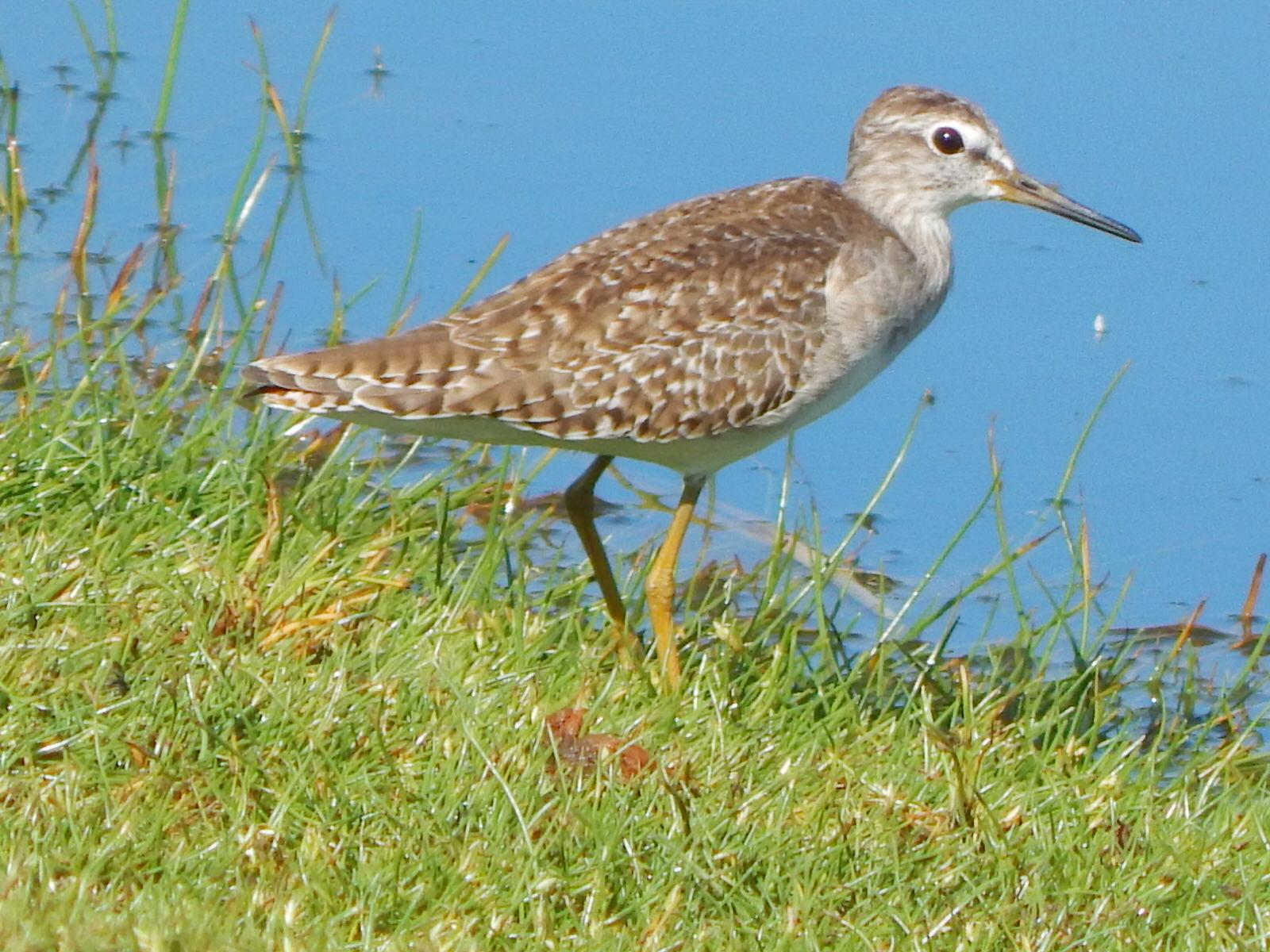 Tanzania Birding Tour