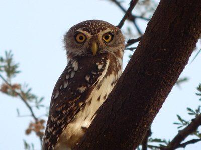 Western Kenya Birding Tour
