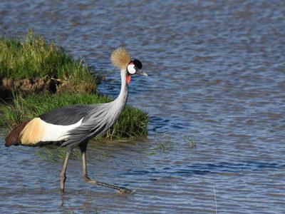 Gatamaiyu Forest and Manguo Swamp Birding Tour