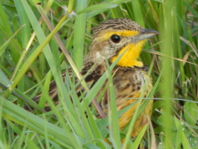 Coastal Kenya Birding Tour
