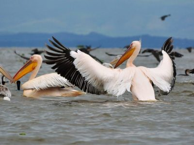 Kenya Birds Photography Safari
