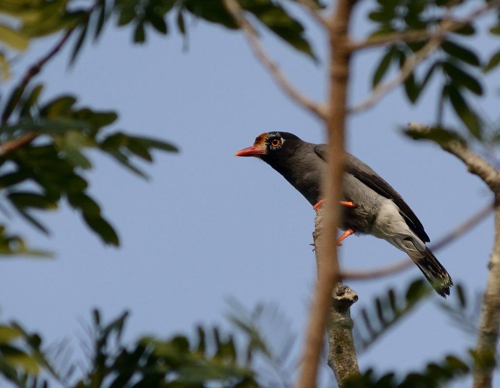 Image result for bird watching in ABERDARE