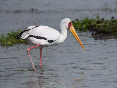 Lake Naivasha Birding Tour