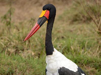 lake-nakuru-stork_1