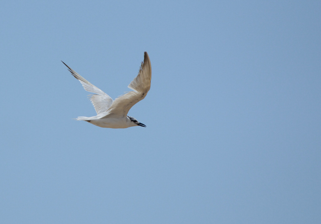 Pemba Island Endemics Birding Tour