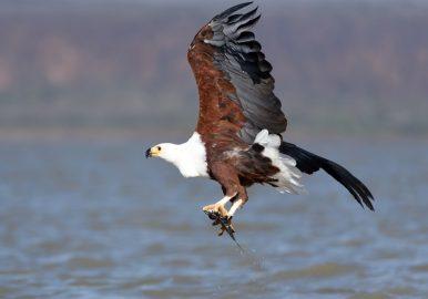 Uganda Birds Photography Safari