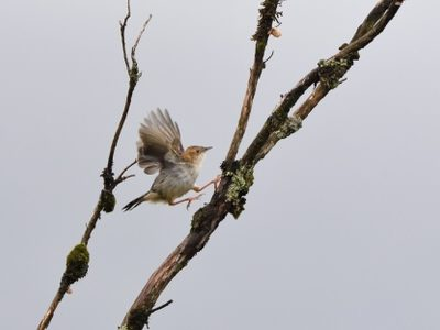 Kenya Endemics Birding Tour
