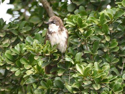 Central Kenya Endemics Birding Tour
