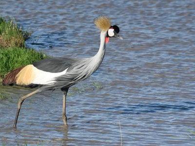 Rwanda Birding Tour