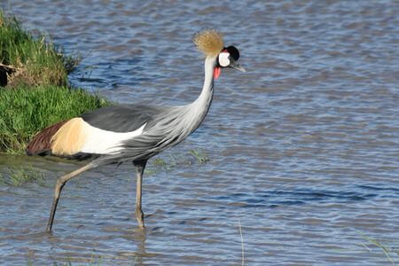 Northern Uganda Birding Safari