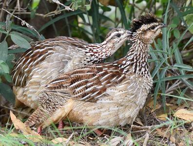 Tanzania and Kenya Birding Safari