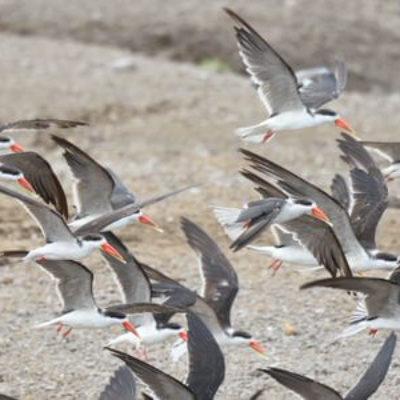 Northern Uganda Birding Safari