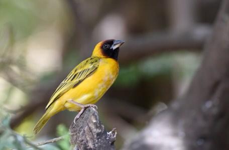 Kenya and Tanzania Birding Tour