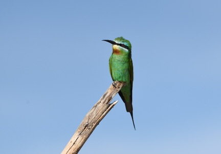 Kenya and Tanzania Birding Tour