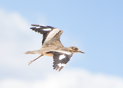 Tanzania and Uganda Birding Tour